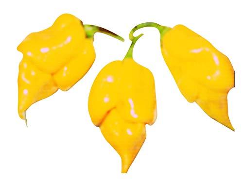Trinidad Scorpion (Yellow, eine der schärfsten Chilis der Welt) 10 Samen von Samenchilishop