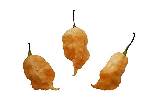 Jay's Peach Ghost Scorpion -Ultrascharfe pfirsichfarbene Super Hot Chili- Sehr Selten