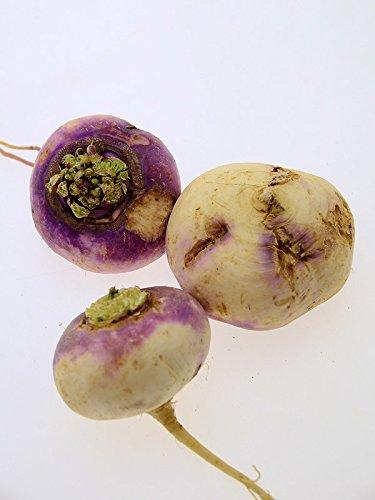 Magic Garden Seeds Herbstrüben 'Runde, Weiße, Rotköpfige' (Brassica rapa SSP. rapa) 500 Samen...