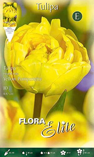 Flora Elite 792243 Gefüllte Tulpe Yellow Pomponette (10 Stück) (Tulpenzwiebeln)