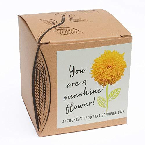Geschenk-Anzuchtset'Sunshine Flower' - Teddybär Sonnenblume