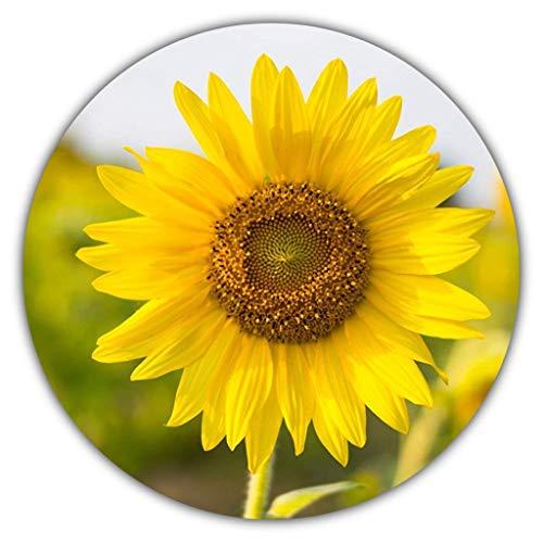 Sonnenblumen Samen/Helianthus annuus/ca. 50 Stück/Hingucker zum Selbstanbauen: gelb, gross