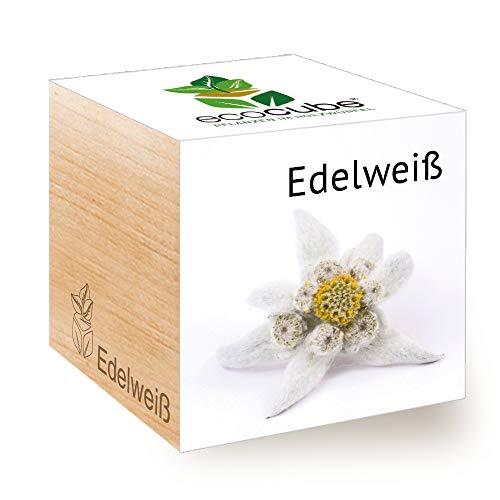 Feel Green Ecocube Edelweiß, Nachhaltige Geschenkidee (100% Eco Friendly), Grow Your...