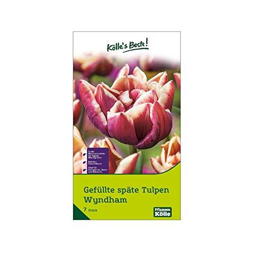 Kölle's Beste! gefüllte Tulpen 'Wyndham', rot, weißer Rand, Größe 11/12, 7 St.