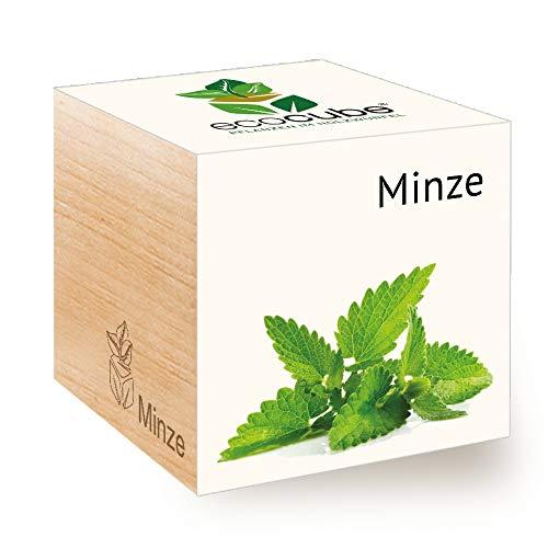 Feel Green Ecocube Minze, Nachhaltige Geschenkidee (100% Eco Friendly), Grow Your Own/Anzuchtset,...