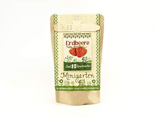 Die Stadtgärtner Minigarten Erdbeere'Tubby Red' | Komplettes Anzuchtset für geschmacksintensive...