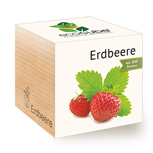 Feel Green Ecocube Erdbeere, Bio Samen, Nachhaltige Geschenkidee (100% Eco Friendly), Grow Your...