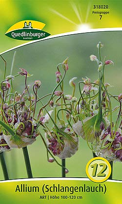 Quedlinburger 318020 Allium Scorodoprasum Art (12 Stück) (Alliumzwiebeln)