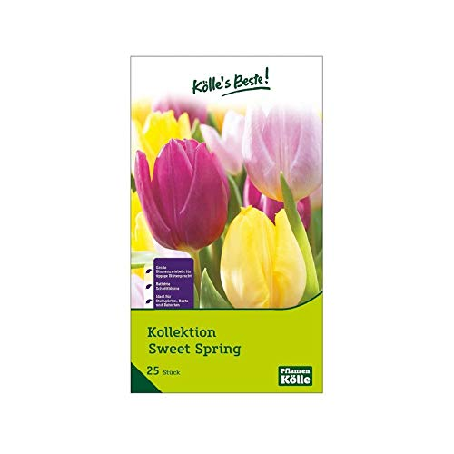 Kölle's Beste! Kollektion Sweet Spring, Blumenzwiebelmischung Größe 11/12, 25 St.