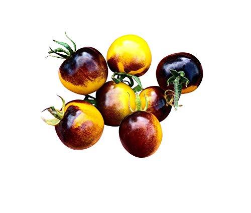 Tomate -Antho Gelb- 10 Samen -Super Lecker & Süß- *Sehr Gesund*