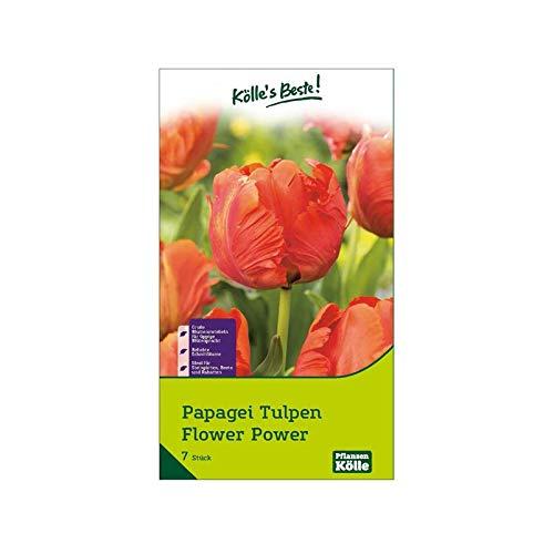 Kölle's Beste! Papagei-Tulpen 'Flower Power', orange, Größe 11/12, 7 St.