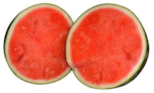 Wassermelone'Sugar-Baby - 10 Samen
