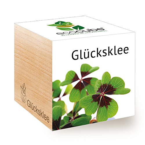 Feel Green Ecocube Glücksklee, Nachhaltige Geschenkidee (100% Eco Friendly), Grow Your...