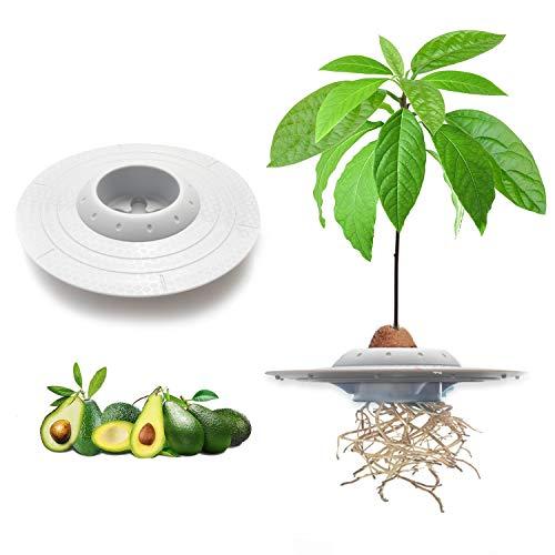 tEEZErshop kinder Avocado pflanzset,Das Beste Garten Samen Starter Geschenke fuer kinder...