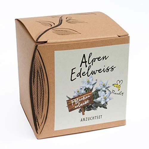 Geschenk-Anzuchtset Alpenedelweiss