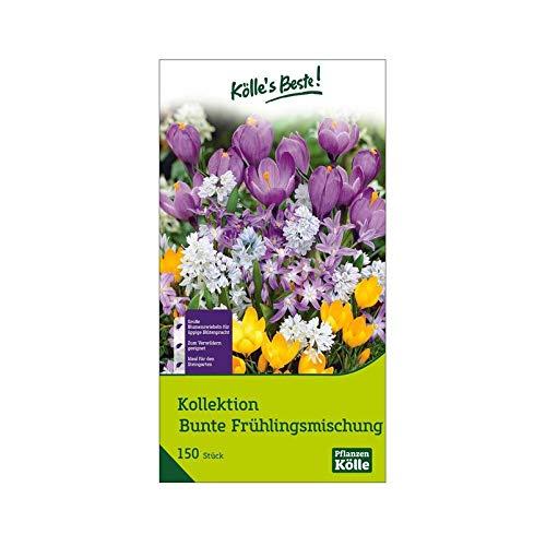 Kölle's Beste! Bunte Frühlingsmischung, Blütezeit Februar-Mai, Mischung aus 150 Zwiebeln