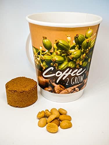 Coffee 2 Grow - Kaffeepflanze für zu Hause/Geschenkset/Kunden-Geschenk/Anzuchtset