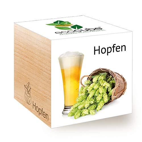 Feel Green Ecocube Hopfen, Nachhaltige Geschenkidee (100% Eco Friendly), Grow Your Own Craft...