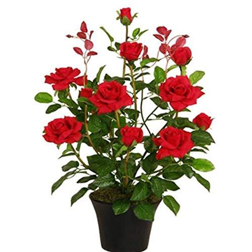 begorey Garten - Mini Rose Baum Samen 50 Stk. Mehrjährige Duftenden Samen Pflanzensamen Blumensamen...