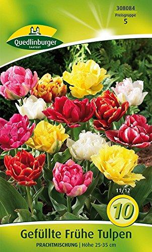 Quedlinburger 308084 Gefüllte Frühe Tulpe Prachtmischung (10 Stück) (Tulpenzwiebeln)