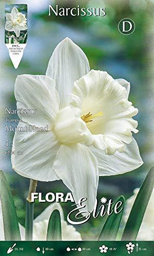 Trompeten-& großkronige Narzissen/Osterglocken 'Mound Hood' weiß, Blumenzwiebeln für...