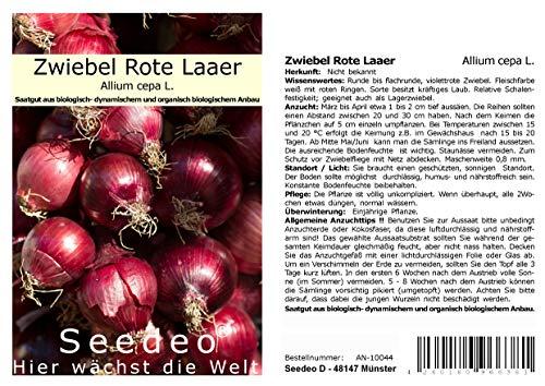 Seedeo® Zwiebel Rote Laaer (Allium cepa L.) 200 Samen BIO
