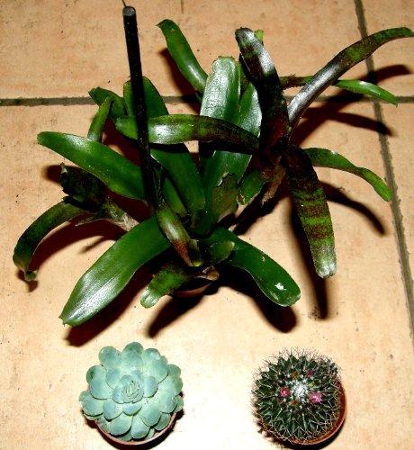 Mühlan Topartikel- Grünpflanzenmix, 4 Verschiedene Topfpflanzen, Zimmerpflanzen, Terrarien...