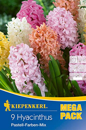 Kiepenkerl 508767 Hyazinthe Pastellfarben Mischung (9 Stück) (Hyazinthenzwiebeln)