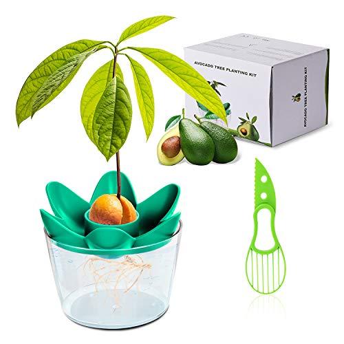 Herefun Avocado Pflanzen Geschenk, Gartenarbeit Avocado Pflanzen Avocado Anzuchtsets, Besondere...