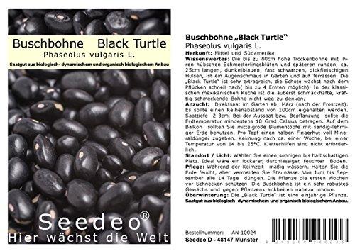 "Seedeo® Buschbohne Black Turtle""(Phaseolus vulgaris L.) 30 Samen BOI"