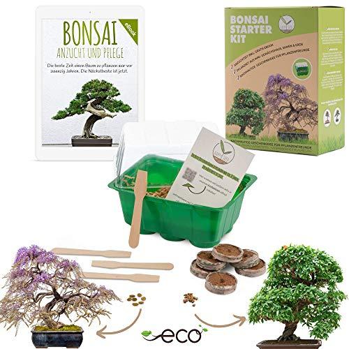 Bonsai Starter Kit Anzuchtset inkl. GRATIS eBook - Pflanzset aus Mini-Gewächshaus, Samen & Erde -...