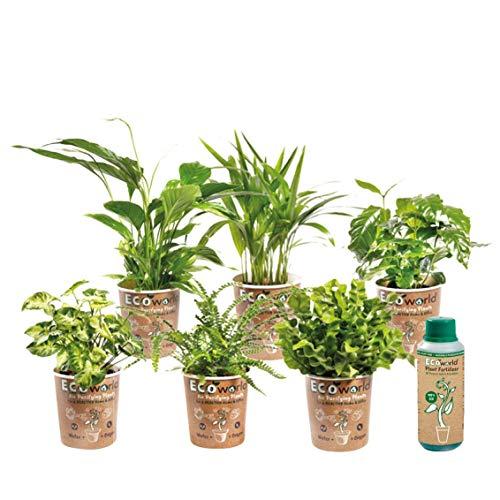 Ecoworld Luftreinigende Zimmerpflanzen, 6er Set - Verschiedene Arten, zur Deko & Luftreinigung -...