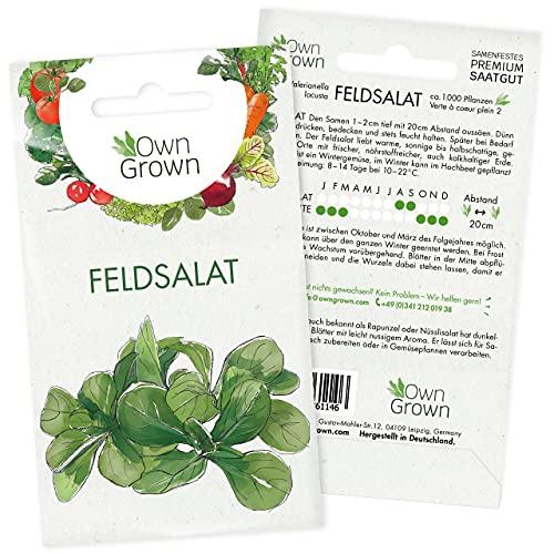 Feldsalat Samen Winterhart: Premium Feldsalat Saatgut für ca. 1000 Feldsalat Pflanzen –...