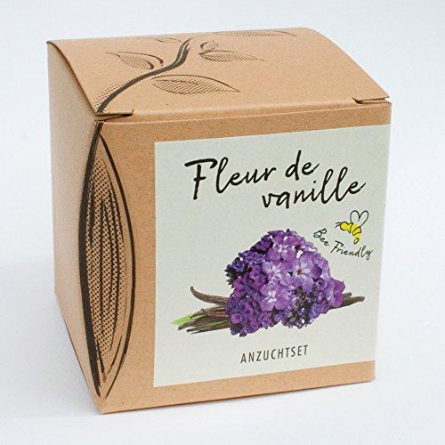 Geschenk-Anzuchtset Vanilleblume