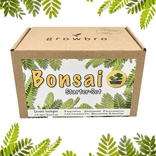 Bonsai Starter Kit, growbro Mimose Anzuchtset, DEIN ERSTER BONSAI, Anfänger Geschenk Set, kleines...