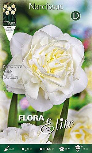 Gefüllte Narzisse 'Obdam' weiß, Blumenzwiebeln für Herbstpflanzung