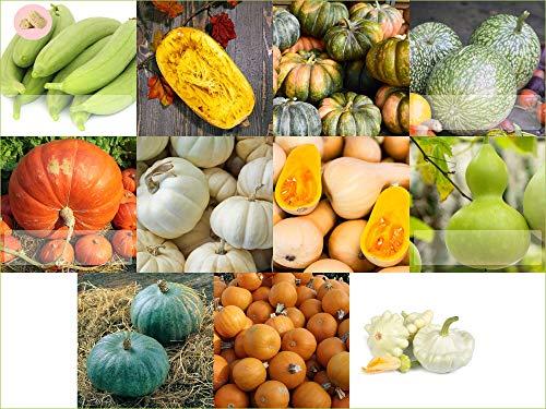 Prademir Kürbis Samen Set 11 x verschiedene Kürbis Saatgut alte Sorten Anzucht für Garten und...