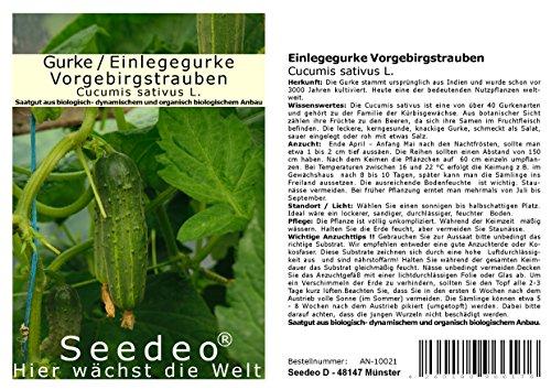 Seedeo® Gurken/Einlegegurke Vorgebirgstrauben (Cucumis sativus L.) ca.30 Samen BIO