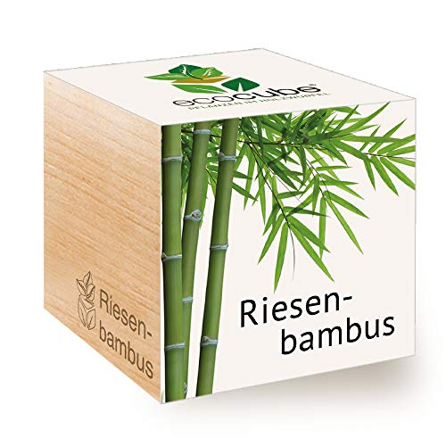 Feel Green Ecocube Riesenbambus, Nachhaltige Geschenkidee (100% Eco Friendly), Grow Your...