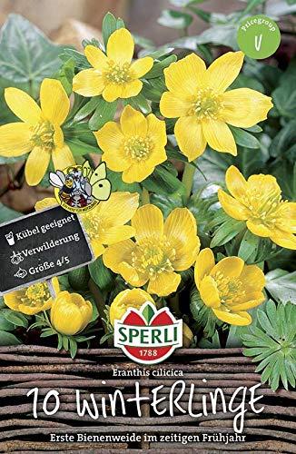 Sperli 460896 Winterling (10 Stück) (Herbstblumenzwiebeln)