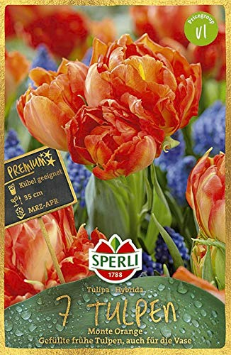 Sperli Premium Tulpen Monte Orange