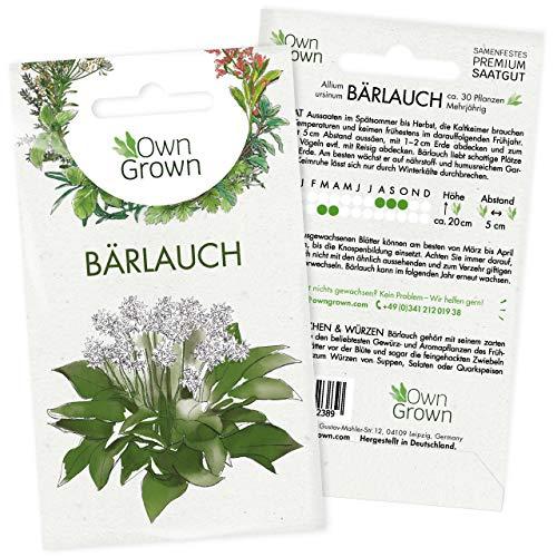 Bärlauch Samen: Premium Bärlauch Saatgut für die Anzucht von ca. 30 Bärlauch Pflanzen im Garten...