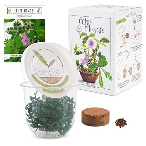 GROW2GO Mimose Starter Kit Anzuchtset - Pflanzset aus Mini-Gewächshaus, Mimose Samen & Erde -...