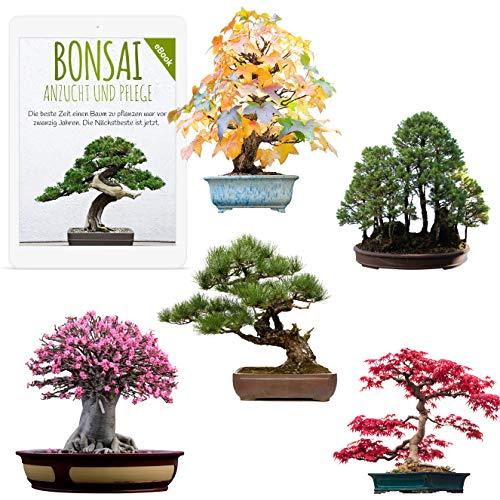 Außergewöhnliche Bonsai Samen mit hoher Keimrate - Pflanzen Samen Set für deinen eigenen Bonsai...
