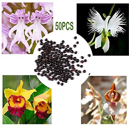 begorey Garten - Pyramide AFFE Orchidee Samen Blumensamen Outdoor Pflanzen Samen Bonsai Samen...