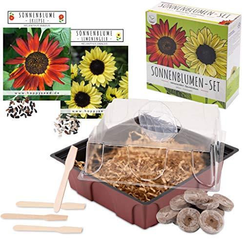 Sonnenblumen Anzuchtset - Pflanzset aus Mini-Gewächshaus, Sonnenblumen Samen & Erde - nachhaltige...