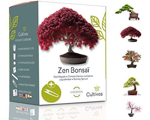 Cultivea Mini - 5 Bonsai Ready-to-Grow Kit - Französisches Saatgut - Gärtnern und dekorieren -...