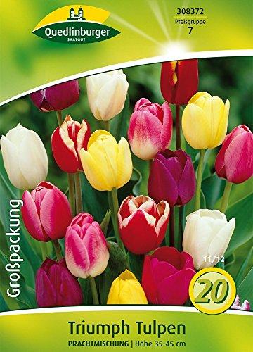 Quedlinburger 308372 Triumph Tulpe Prachtmischung (20 Stück) (Tulpenzwiebeln)