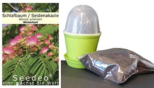 Seedeo Anzuchtset Schlafbaum (Albizzia julibrissin) 50 Samen