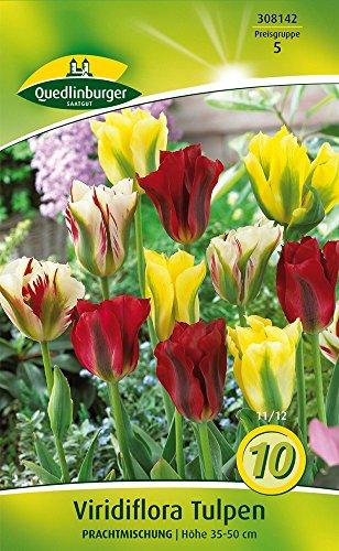 Quedlinburger 308142 Tulpe Viridiflora Prachtmischung (10 Stück) (Tulpenzwiebeln)